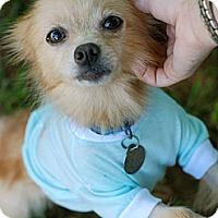 Adopt A Pet :: Pixie - Homewood, AL