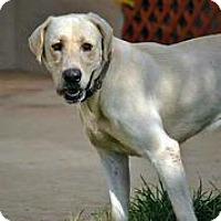 Adopt A Pet :: Maverick - Austin, TX