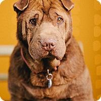 Adopt A Pet :: Finn - Portland, OR
