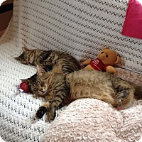Adopt A Pet :: Mason and Snookey - Manchester, CT
