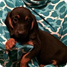 Adopt A Pet :: Ravenna