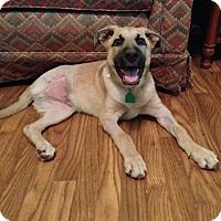 Adopt A Pet :: Rocky - Natchitoches, LA