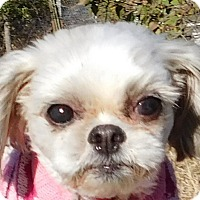 Adopt A Pet :: Dolly - MINNEAPOLIS, KS