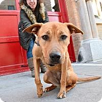 Adopt A Pet :: Arya Stark - Jersey City, NJ