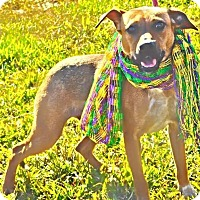 Adopt A Pet :: Dancer - Charlemont, MA