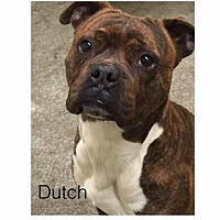 Adopt A Pet :: Dutch - Butler, KY