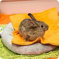 Adopt A Pet :: *LUKE - Sacramento, CA