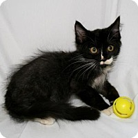 Adopt A Pet :: Riesling - Bradenton, FL