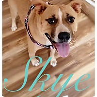 Terrier (Unknown Type, Medium) Mix Dog for adoption in Charlotte, North Carolina - SKYE