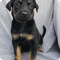 Adopt A Pet :: Dolly - Champaign, IL