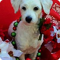 Adopt A Pet :: Eloise - Irvine, CA