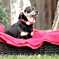 Adopt A Pet :: Zach - Sacramento, CA