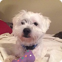 Adopt A Pet :: Brady - Newport, KY
