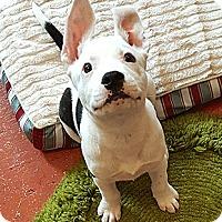Adopt A Pet :: Squash - Oakland, CA