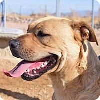 Adopt A Pet :: Cherokee - Sierra Vista, AZ
