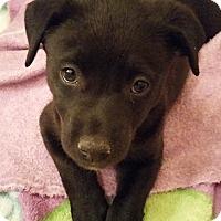 Adopt A Pet :: Addison - Wichita Falls, TX
