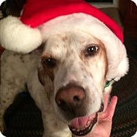 Adopt A Pet :: REX - Pine Grove, PA