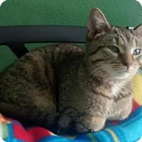 Adopt A Pet :: Lora - Minneapolis, MN