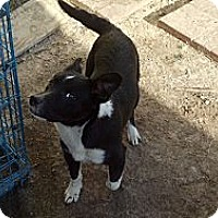 Adopt A Pet :: jackie-o - Fort Valley, GA