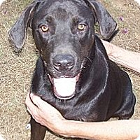 Adopt A Pet :: Roy - Conway, AR