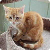 Adopt A Pet :: Harvey - Catasauqua, PA