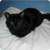 Adopt A Pet :: Giselle - Hamburg, NY