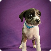 Adopt A Pet :: Zuko - Broomfield, CO