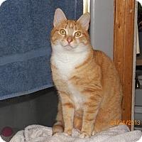 Adopt A Pet :: Daisy - Benton, PA