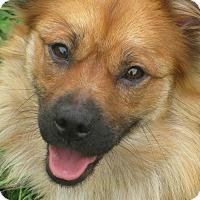 Adopt A Pet :: Dutchess - Albany, NY