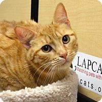 Adopt A Pet :: *JESSIE - Sacramento, CA