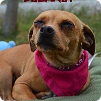 Adopt A Pet :: Delaney - Patterson, CA