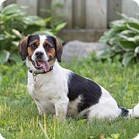Adopt A Pet :: Otis - Drumbo, ON