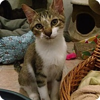 Adopt A Pet :: Mickey - St. James City, FL
