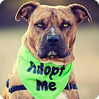 Adopt A Pet :: Ben - Charlotte, NC