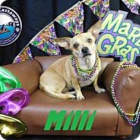 Adopt A Pet :: Milli - Arcadia, FL