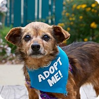 Adopt A Pet :: Meagan - Pacific Grove, CA
