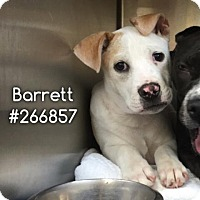 Adopt A Pet :: BARRET - Conroe, TX