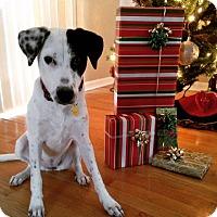 Adopt A Pet :: Nina - Tampa, FL