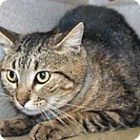 Adopt A Pet :: Scooter - Wildomar, CA