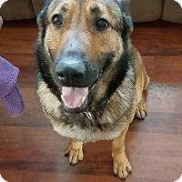 Adopt A Pet :: Sable - Virginia Beach, VA