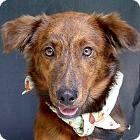 Adopt A Pet :: Andouille - Baton Rouge, LA