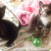 Adopt A Pet :: adopt two - Whitestone, NY