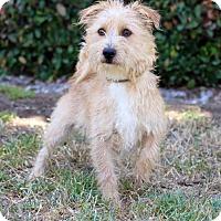 Adopt A Pet :: Montagne - San Diego, CA