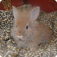 Adopt A Pet :: Sven - 1 lb - Warwick, NY