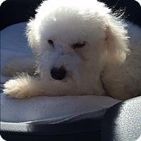 Adopt A Pet :: Collins - Thousand Oaks, CA