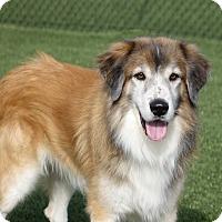 Adopt A Pet :: McLintock - Columbia, IL