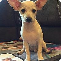Adopt A Pet :: Einstein - Bristol, CT
