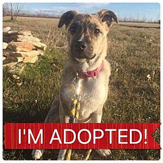 Pit Bull Terrier Mix Puppy for adoption in Regina, Saskatchewan - Jager