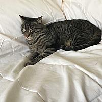 Adopt A Pet :: Seth - Monrovia, CA