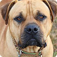 Adopt A Pet :: Mack - Dunkirk, NY